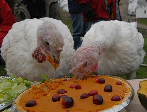 Ditch Turkey for Thanksgiving